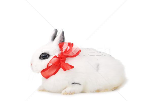 Coniglio piccolo bella bianco party Foto d'archivio © taden