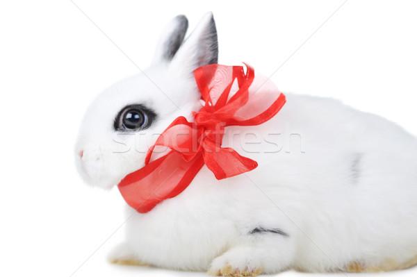 ストックフォト: ウサギ · 小 · 美しい · 白 · パーティ