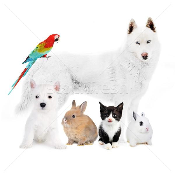Vogel konijnen witte hond kat dieren Stockfoto © taden