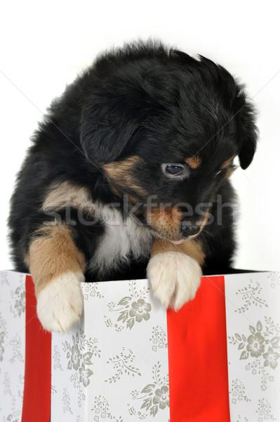 子犬 ギフトボックス 黒 孤立した 犬 ボックス ストックフォト © taden