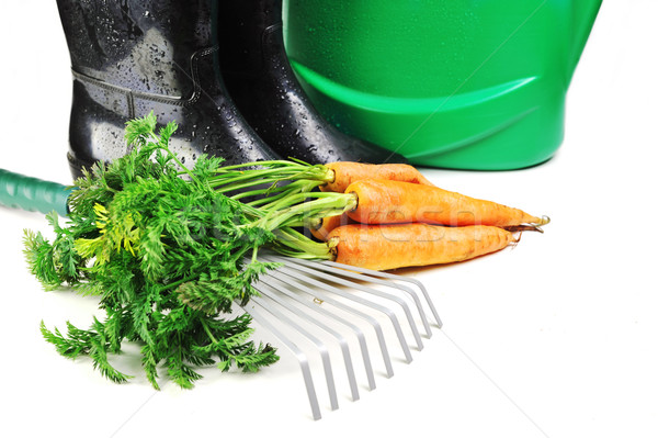 carrot and gardening tools Stock photo © taden