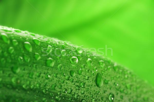 緑色の葉 水滴 水 工場 ドロップ ストックフォト © taden