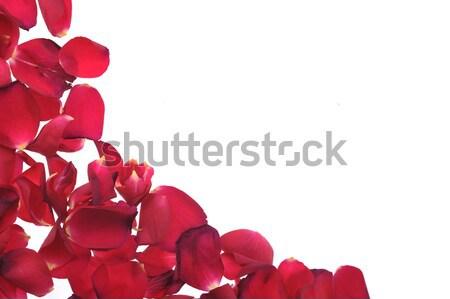 red petals Stock photo © taden