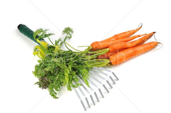 Sárgarépa kerti eszközök kertészkedés természet munkás eszik Stock fotó © taden