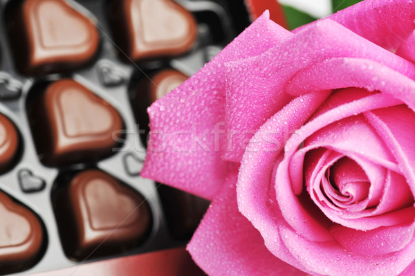 chocolate  and pink rose Stock photo © taden