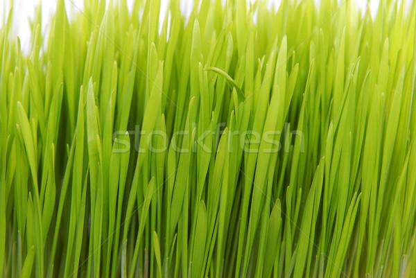 fresh grass  Stock photo © taden