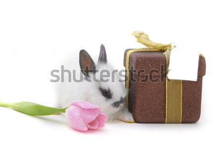 small rabbit with flower and present Stock photo © taden