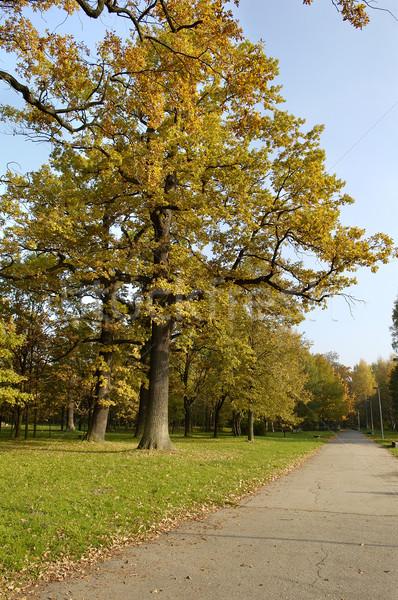Roble amarillo hojas cielo azul forestales árboles Foto stock © taden