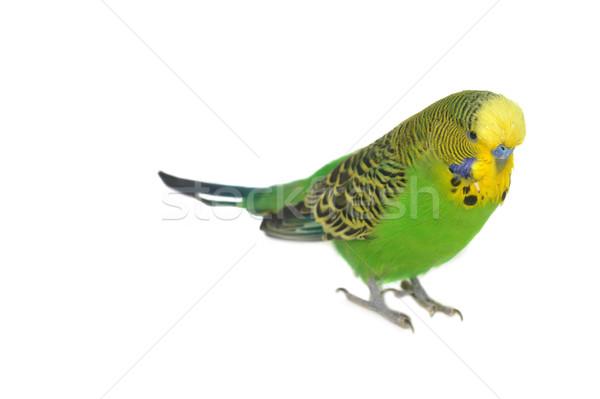 Retrato primer plano pluma animales cabeza tropicales Foto stock © taden