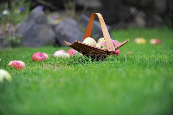 Photo stock: Panier · pommes · osier · jardin · été · vert