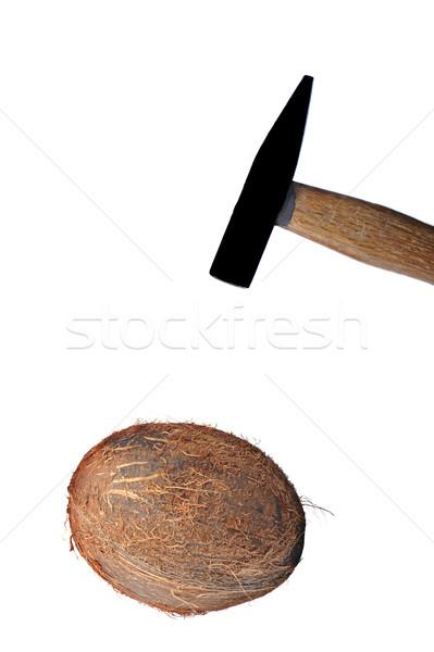 Kókusz izolált fehér kalapács mag dió Stock fotó © taden