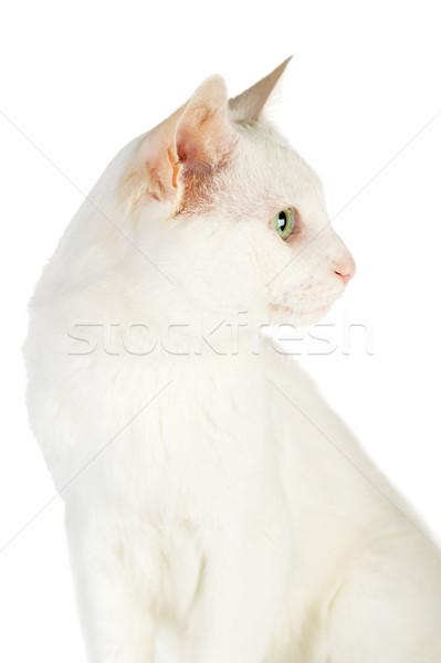Witte cute geïsoleerd ogen natuur Stockfoto © taden