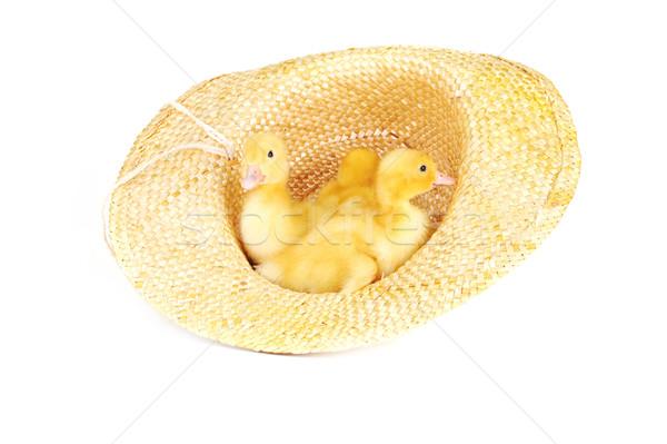 Sarı kabarık üç sevimli hasır şapka yalıtılmış Stok fotoğraf © taden