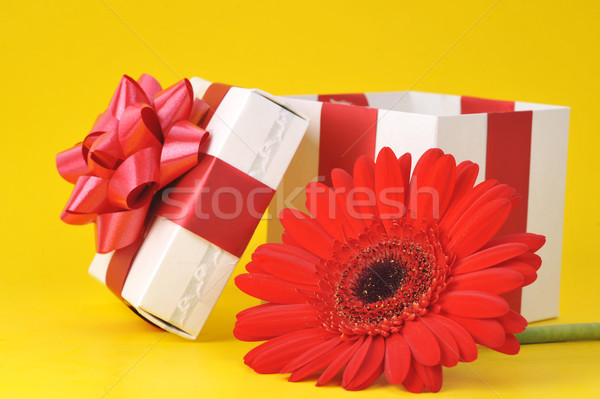 gift box and red flower Stock photo © taden