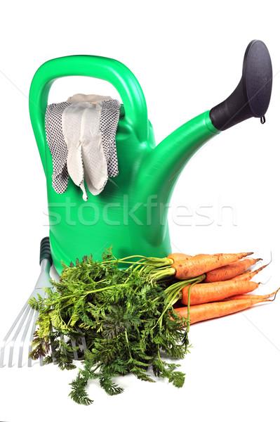 人参 じょうろ 新鮮な 緑 孤立した ストックフォト © taden