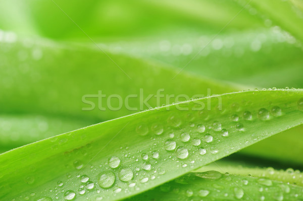 stalks with leaves Stock photo © taden