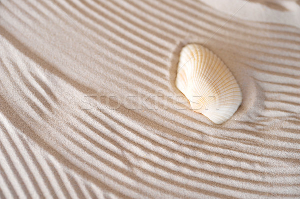 cockleshell on sea sand Stock photo © taden