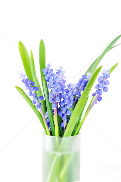 Azul flor vidro vaso flores primavera Foto stock © taden