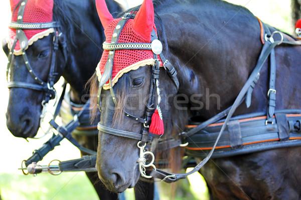 horses Stock photo © taden