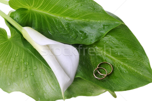 calla lily and wedding rings Stock photo © taden