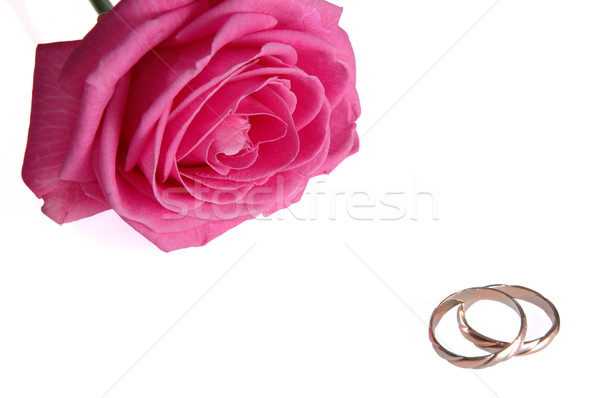 pink rose with rings  Stock photo © taden