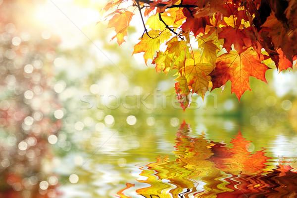 красивой красочный парка дизайна кадр Сток-фото © taden