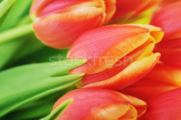 Stok fotoğraf: Kırmızı · lale · buket · çok · çiçekler · doğa
