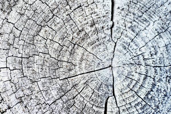 Keresztmetszet fa közelkép fából készült vág textúra Stock fotó © taden