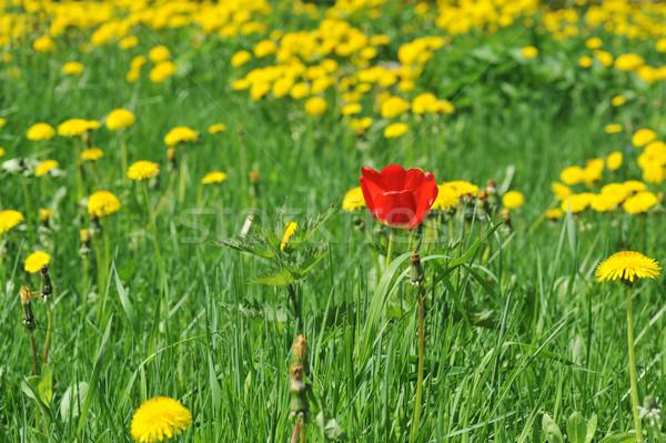 flowers blooming  Stock photo © taden