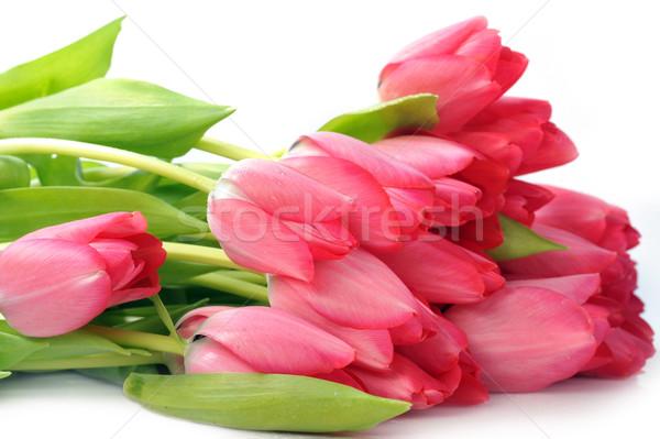 Kırmızı lale buket çok çiçekler doğa Stok fotoğraf © taden