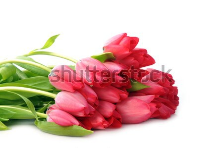 Rojo tulipanes ramo muchos flores naturaleza Foto stock © taden