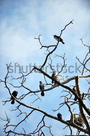 филиала мертвых деревьев вечер небе дерево морем Сток-фото © taden
