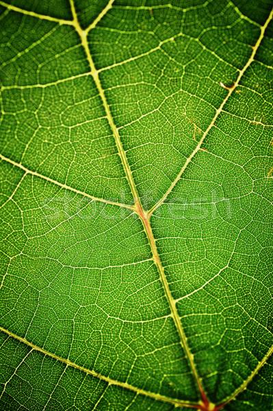 緑色の葉 ツリー フレーム 手のひら 緑 ストックフォト © taden