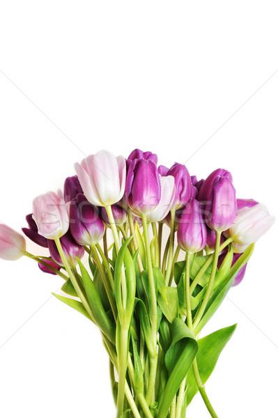 tulips Stock photo © taden