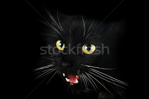 黒猫 肖像 怒っ 髪 動物 ストックフォト © taden