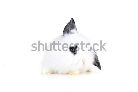 小 白 ウサギ イースター 芸術 ストックフォト © taden