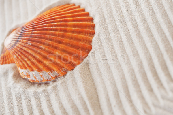 Zee zand zomer oranje shell achtergronden Stockfoto © taden