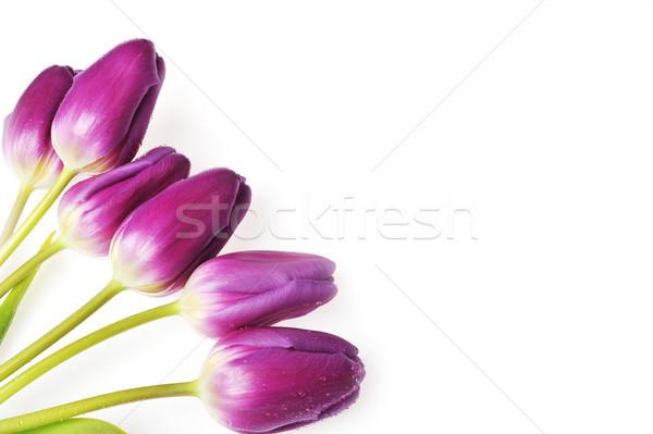 Violet tulpen boeket veel bloemen Stockfoto © taden
