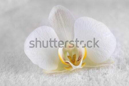 Stockfoto: Witte · orchidee · verrukkelijk · geïsoleerd · bloemen
