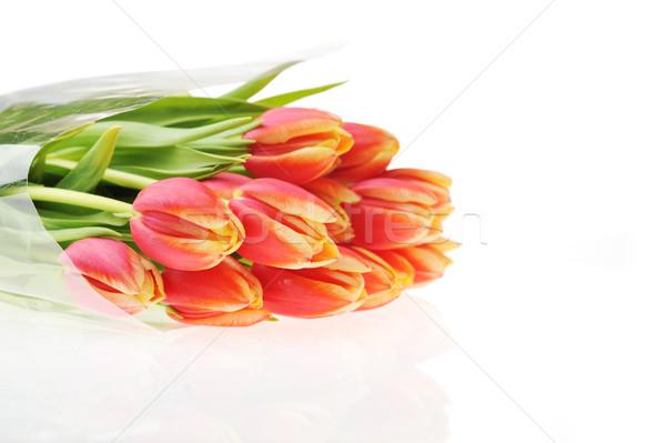 Rood tulpen boeket veel bloemen natuur Stockfoto © taden