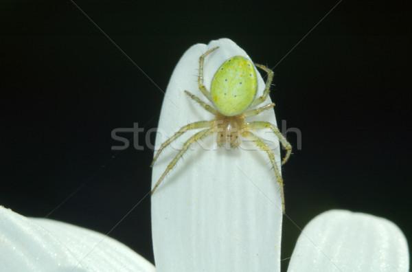 зеленый Spider глазах ног Scary макроса Сток-фото © taden