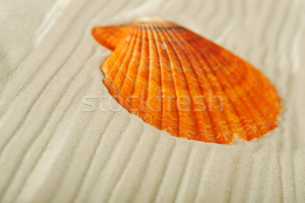 cockleshells on sand Stock photo © taden