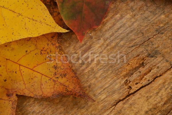 Yaprakları akçaağaç sonbahar renkli ahşap doku Stok fotoğraf © taden