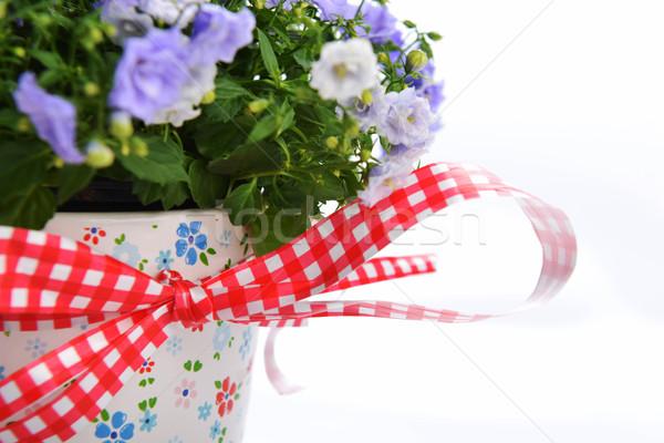 Bloemen Blauw bloempot schoonheid boeket decoratie Stockfoto © taden