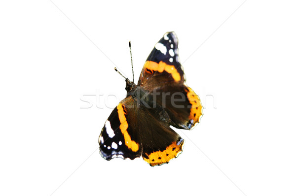 butterfly  Stock photo © taden
