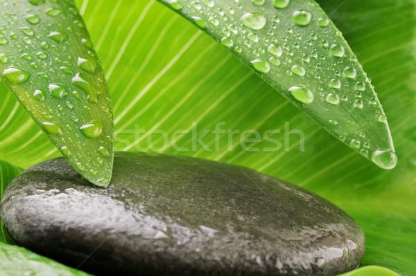 緑色の葉 グレー 石 緑 水滴 ストックフォト © taden