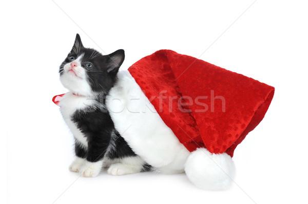 cute kitten with santas hat Stock photo © taden