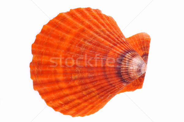 sea cockleshell Stock photo © taden