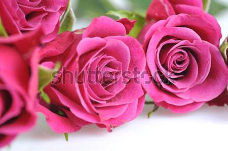 Rose macro mariage nature Photo stock © taden