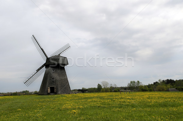 old mill at dandelion field Stock photo © taden
